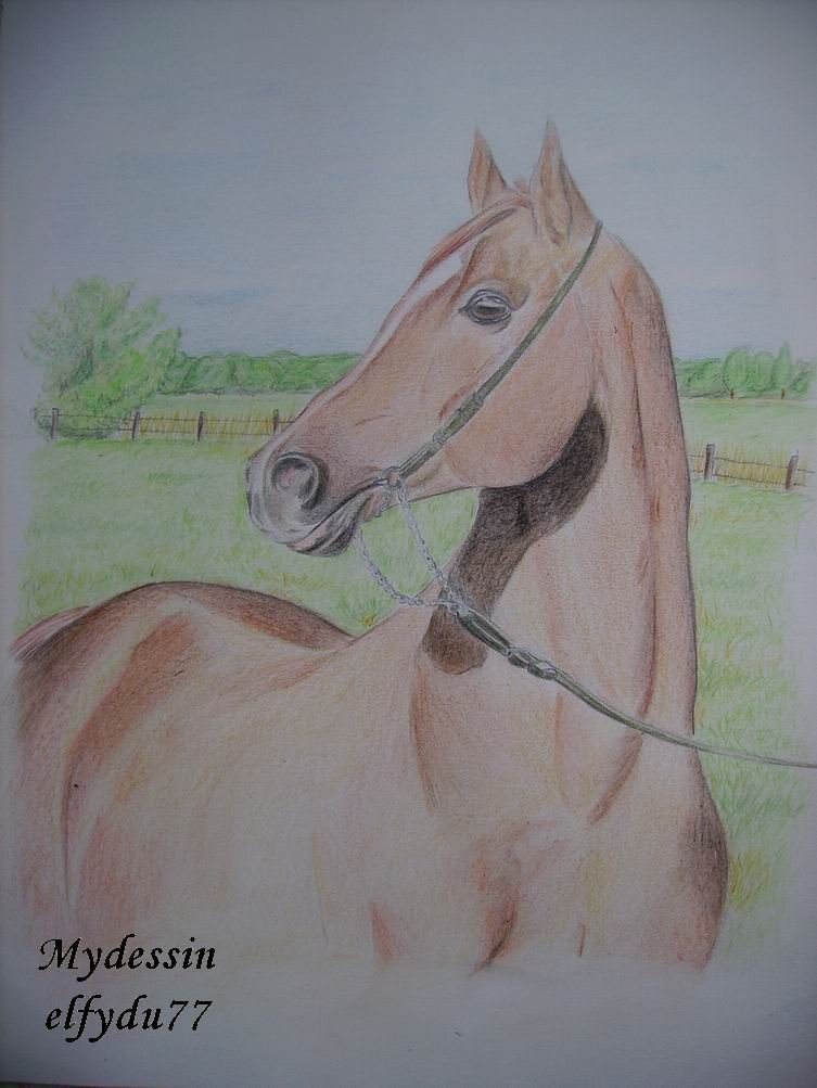 Cheval arabe pur sang - Cheval dessin couleur ...